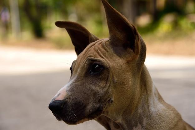 探している若い犬