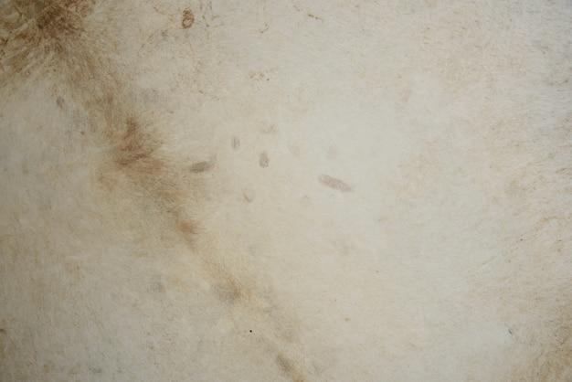 牛の皮の白い壁