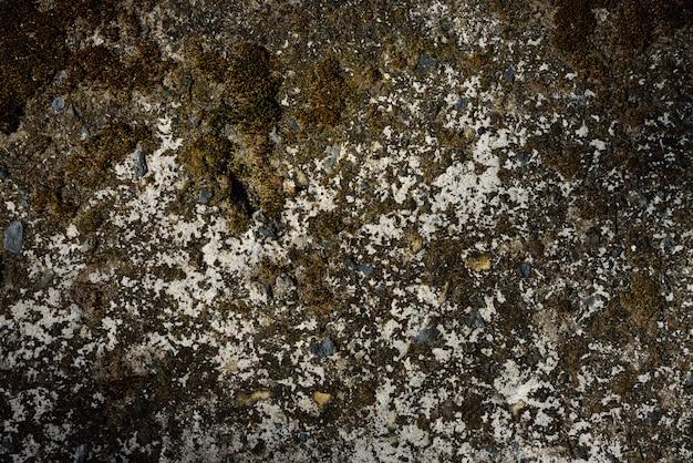 ブラウンドライモス壁