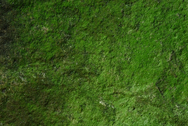 緑の苔の壁