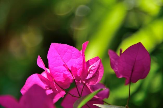 緑の自然の背景に紫の花
