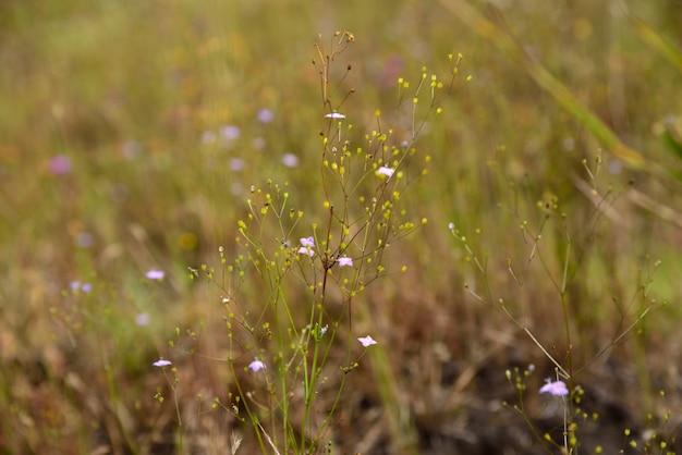 緑の芝生の背景に小さな白い花