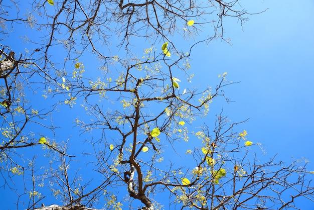 青い空を背景に枝