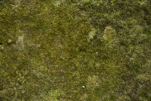 緑の苔の背景