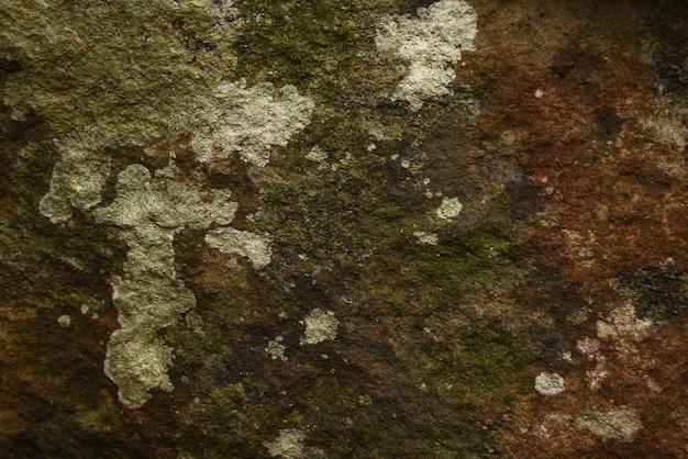 自然の質感と背景の石の上に乾燥苔