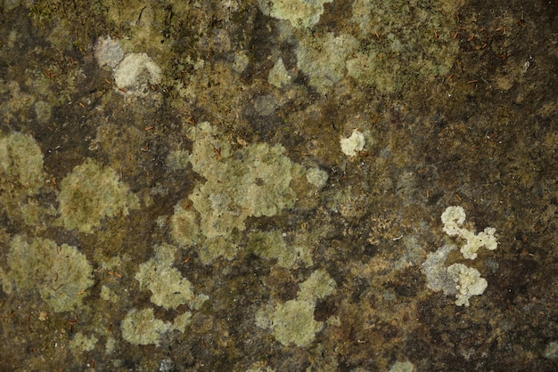 緑の苔のテクスチャと背景。