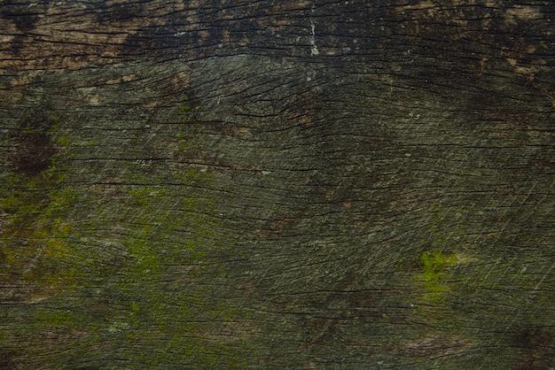 自然の中の石のコケ