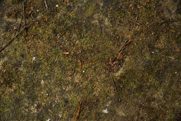 自然の中でコケの壁の背景