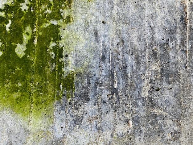 Зеленый мох фон в природе