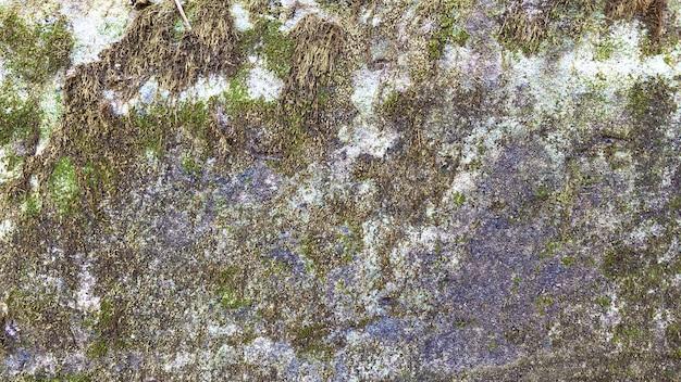緑の苔のテクスチャと背景