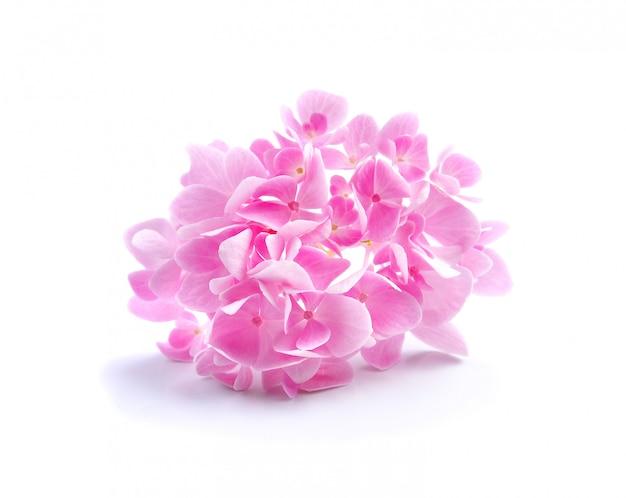 白い背景にアジサイの花