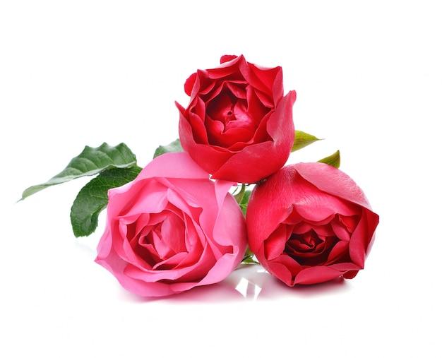 美しいバラの分離