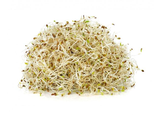 Проросшие семена люцерны на белом