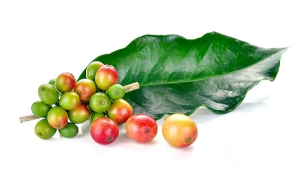 白で隔離される新鮮なコーヒー豆