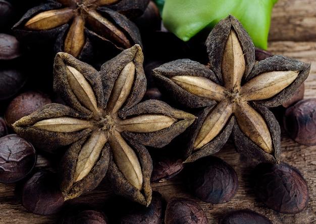 木の上のドライカプセル種子フルーツのサシャインチ落花生