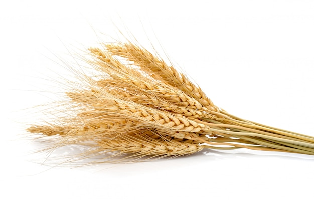 白大麦の穂