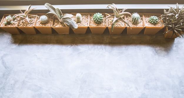 白い背景を持つ窓辺に緑のサボテン。上面図