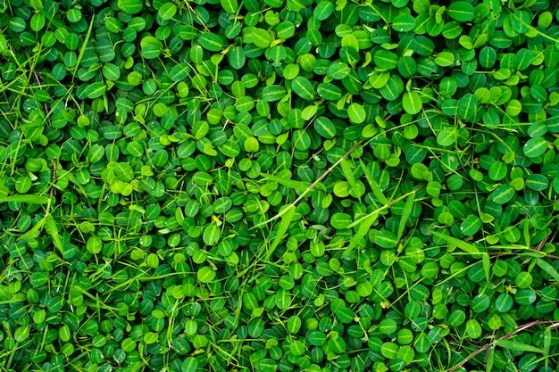 葉の自然の緑のテクスチャ、緑の葉のテクスチャの完全なフレーム。背景として。