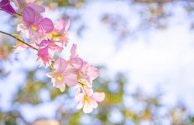 Предпосылка природы цветка, конец вверх цветка орхидей.