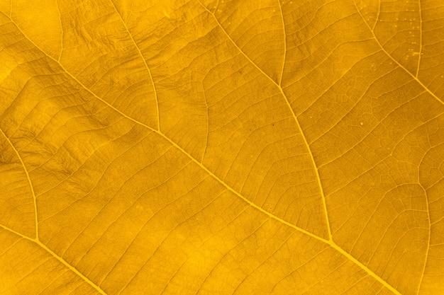 自然茶色の葉のテクスチャの完全なフレームの背景。