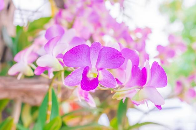 森の中のピンクの花。