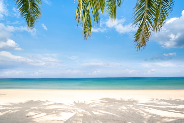 Пляж и пальмовые листья в летний день