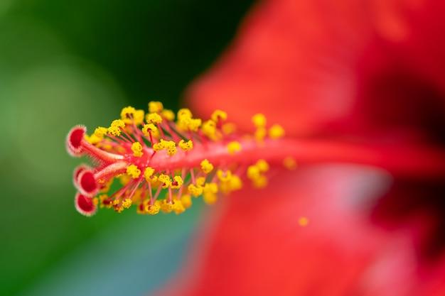 Макро съемка красный цветок