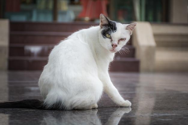 視覚障害のある猫