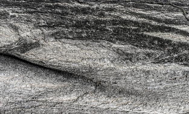 大きな木の皮は自然な背景です。