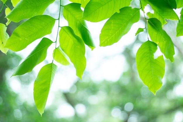 緑の自然の背景を残しました。