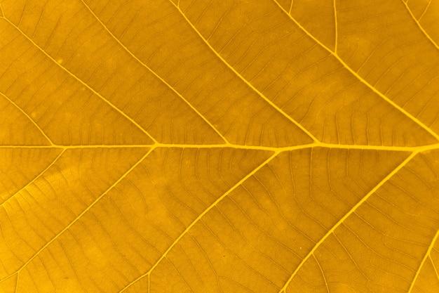オレンジの葉のテクスチャ背景のマクロ写真