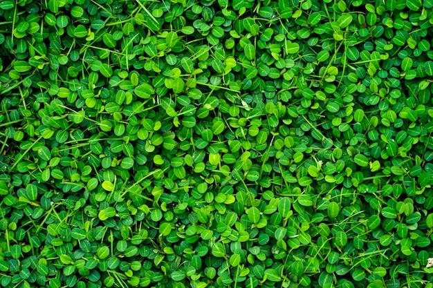 緑の葉のテクスチャ背景。