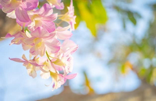 花、自然、背景、太陽の光の中で蘭の花のクローズアップ。