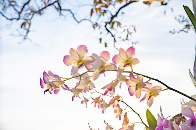 花、自然、背景、太陽の光で木の蘭の花のクローズアップ。