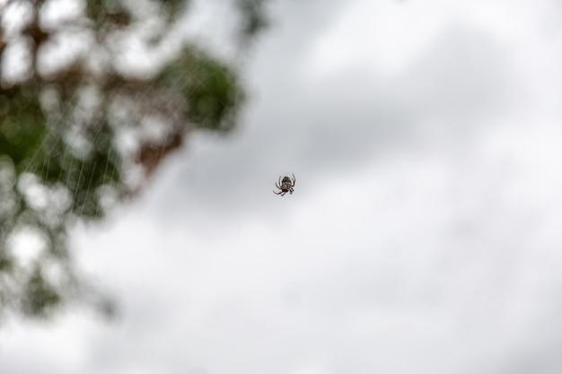 木の上に何千ものクモ。