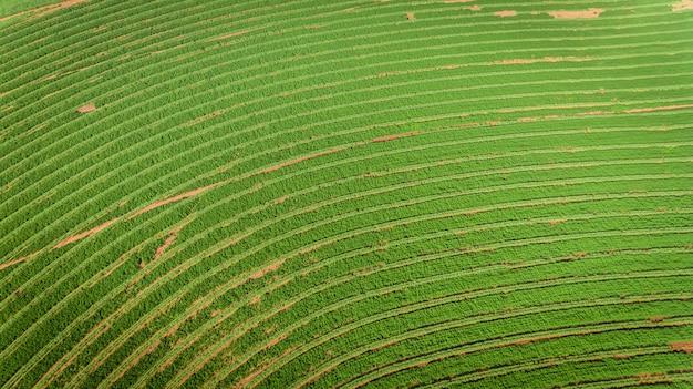 サトウキビプランテーションフィールド空撮日光。農業産業