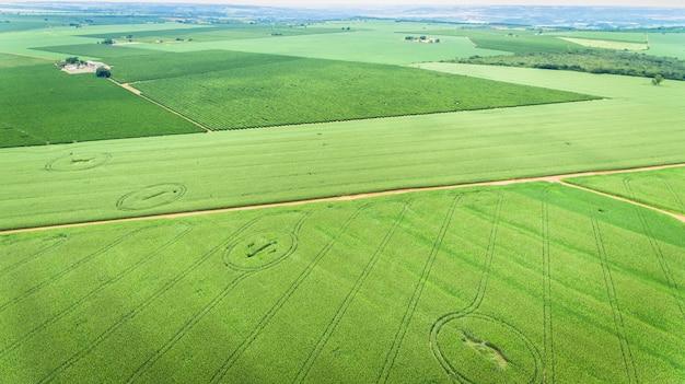 トウモロコシ畑航空写真ビュー、栽培トウモロコシ作物。