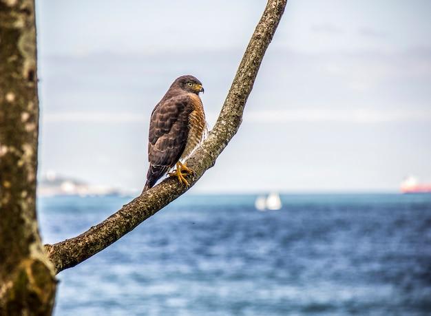 屋外のブラジルの鳥
