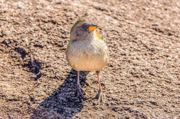 ブラジルの鳥の屋外