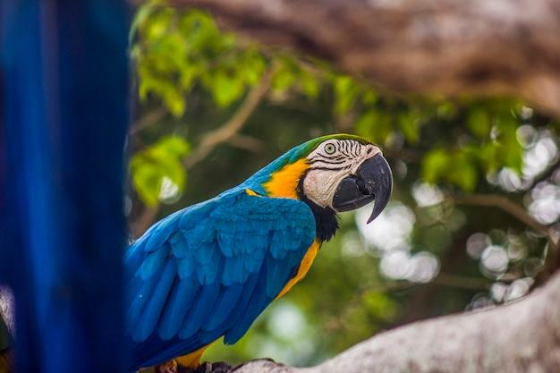Бразильские птицы на открытом воздухе