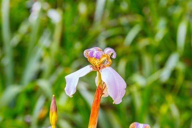 偽虹彩として知られる植物