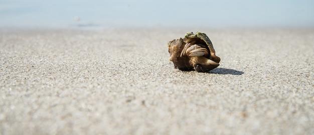 透明な白いビーチで貝殻のヤドカリ