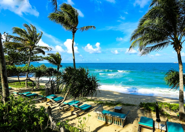 木と夏の空と美しいビーチ。