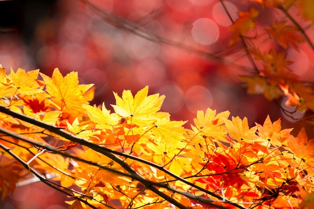 秋の秋の背景