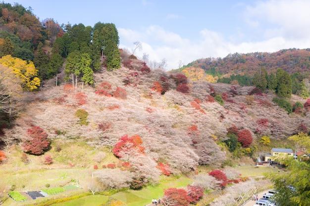 名古屋、秋の小原さくら