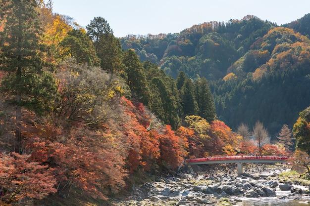 コランケイフォレスト秋の公園名古屋