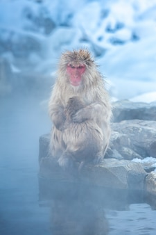 雪猿マカク温泉