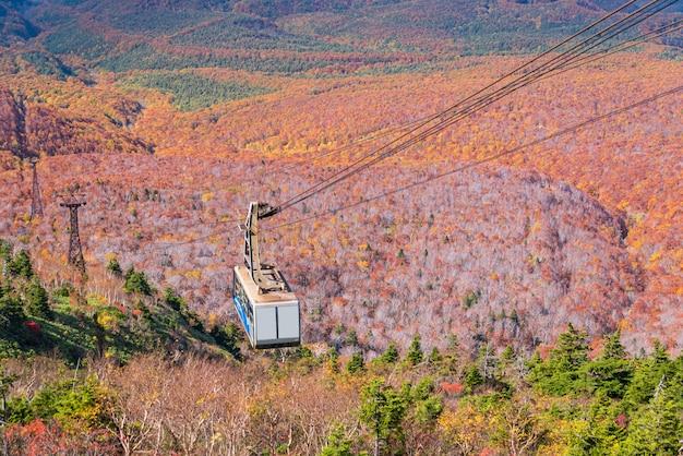秋の森の森日本空撮