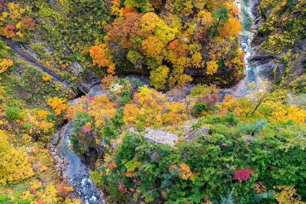 秋の秋の川の風景の空撮