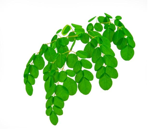 Листья моринги изолят